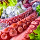Raw octopus on the ice. A fresh raw octopus on the ice Royalty Free Stock Images