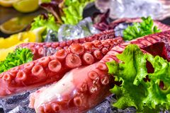 Raw octopus on the ice. A fresh raw octopus on the ice Royalty Free Stock Photos