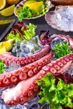Raw octopus on the ice. A fresh raw octopus on the ice Stock Photo