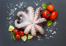 Raw octopus with lime, tomatoes and basil Royalty Free Stock Image