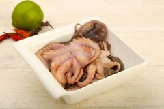 Raw octopus. Ready for cooking Stock Image