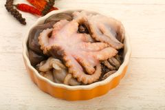 Raw octopus. Ready for cooking Royalty Free Stock Photography