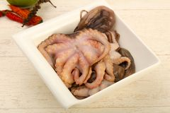 Raw octopus. Ready for cooking Stock Photography