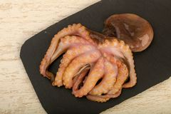 Raw octopus. Ready for cooking Stock Images