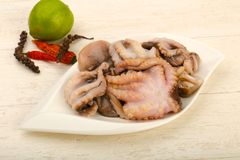 Raw octopus. Ready for cooking Stock Photos