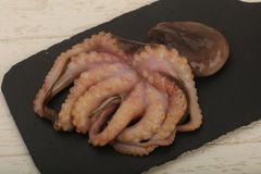 Raw octopus. Ready for cooking Stock Photo