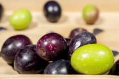 Raw olives with different shades of color and ripening Royalty Free Stock Images