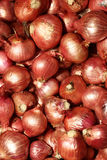 Raw onion Stock Photo