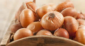 Raw onion in basket Royalty Free Stock Image