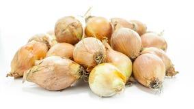 Raw Onion Stock Photography