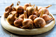 Raw onions. On wooden background Stock Image