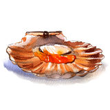 Raw open scallop, pecten, seafood, isolated, watercolor illustration, white background Royalty Free Stock Photo