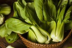Raw Organic Baby Bok Choy Royalty Free Stock Image