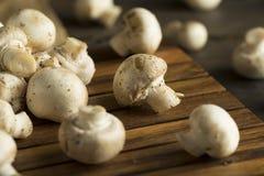 Raw Organic Baby Button Mushrooms Stock Photography
