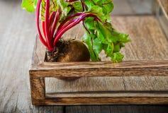 Raw Organic Beet Royalty Free Stock Photography