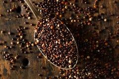 Raw Organic Black Quinoa Stock Photos