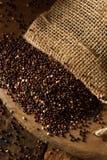 Raw Organic Black Quinoa Stock Photography