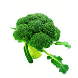 Raw Organic Broccoli. Isolated on White Background Royalty Free Stock Photos