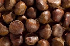 Raw Organic Brown Chestnuts Stock Photography