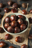 Raw Organic Brown Chestnuts Stock Photos
