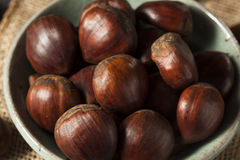 Raw Organic Brown Chestnuts Stock Images