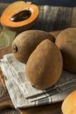 Raw Organic Brown Mamey Fruit Stock Photography
