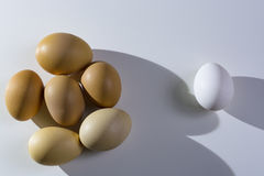 Raw organic brown and white eggs over white background. Alone among strangers, the concept of inequality and racism. Raw organic rustic brown and white eggs over Royalty Free Stock Photos
