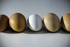 Raw organic brown and white eggs over white background. Alone among strangers, the concept of inequality and racism. Raw organic rustic brown and white eggs over Stock Images