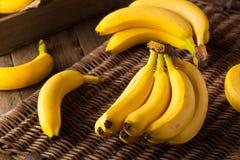 Raw Organic Bunch of Bananas Stock Photos