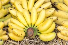 Raw Organic Bunch of Bananas Ready to Eat Royalty Free Stock Photo