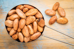 Raw organic cacao beans Royalty Free Stock Photography