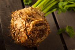 Raw Organic Celery Root Royalty Free Stock Images