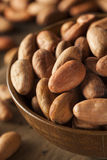 Raw Organic Cocoa Beans Stock Photography
