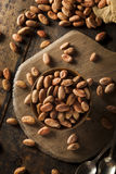 Raw Organic Cocoa Beans Royalty Free Stock Photos