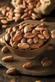 Raw Organic Cocoa Beans Royalty Free Stock Photography