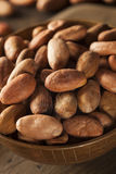 Raw Organic Cocoa Beans Stock Image