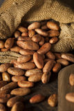 Raw Organic Cocoa Beans Royalty Free Stock Images