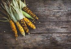 Raw Organic Corn Stock Photo