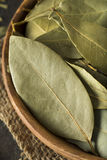 Raw Organic Dry Bay Leaves Royalty Free Stock Photo