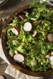 Raw Organic Endive and Radish Salad. With Dressing Royalty Free Stock Photo