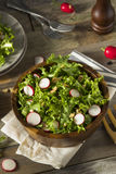 Raw Organic Endive and Radish Salad. With Dressing Royalty Free Stock Images