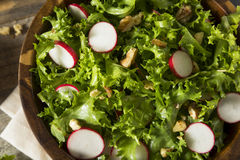 Raw Organic Endive and Radish Salad. With Dressing Stock Photo