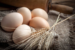Raw organic farm eggs. Royalty Free Stock Images
