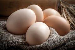 Raw organic farm eggs. Stock Photo