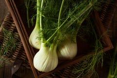Raw Organic Fennel Bulbs Stock Photography
