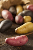 Raw organic fingerling potato medley Stock Photos