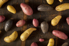 Raw organic fingerling potato medley Royalty Free Stock Images