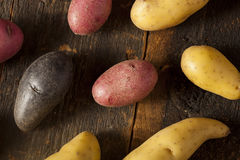 Raw organic fingerling potato medley Royalty Free Stock Photography