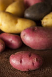 Raw organic fingerling potato medley Royalty Free Stock Photo