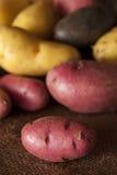Raw organic fingerling potato medley Royalty Free Stock Photo